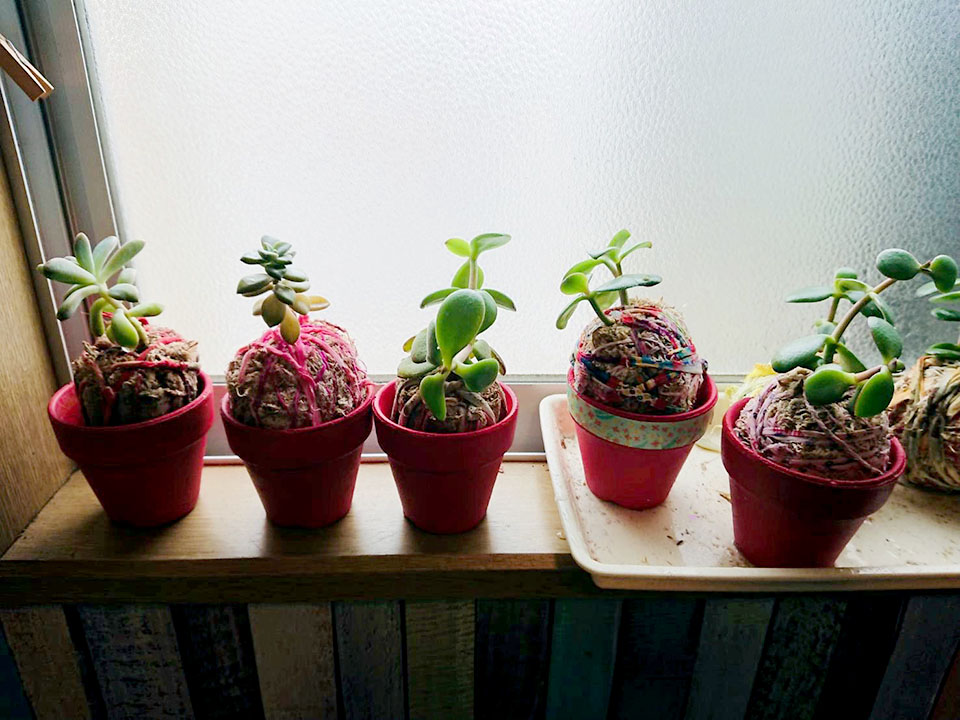 多肉植物作り・苔玉作り
