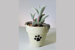 猫足の鉢植え